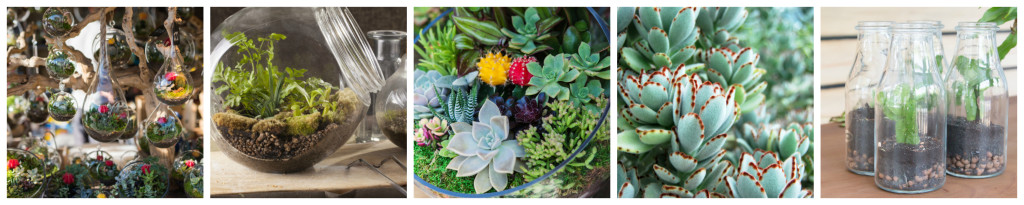 bella call terrariums