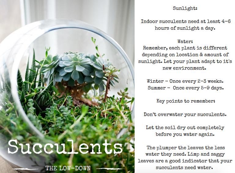 Succulent Care