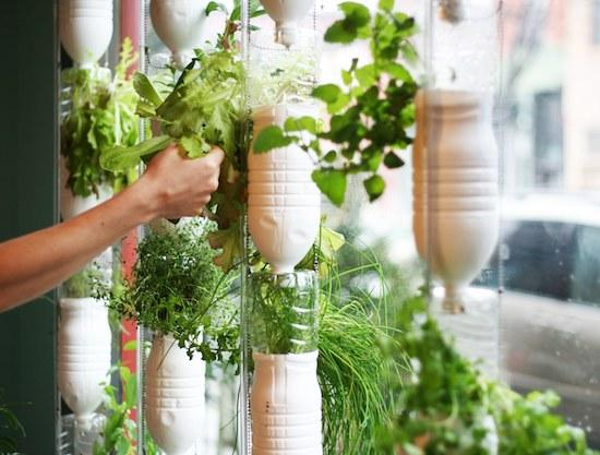 As Green as it Gets: Window Farming for Beginners