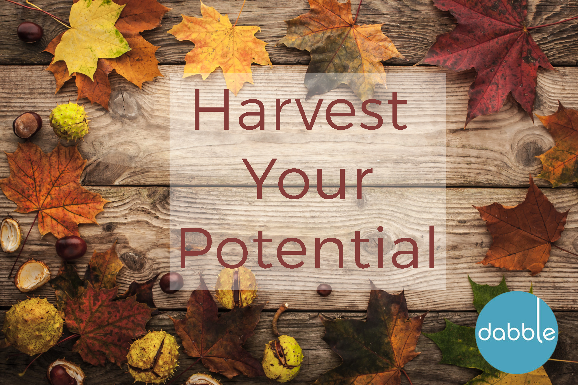 Harvest Your Potential