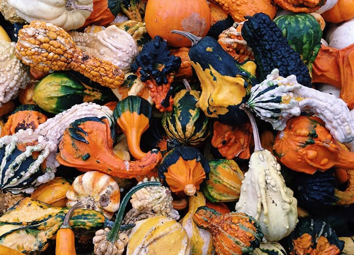 thanksgiving-post-gourds