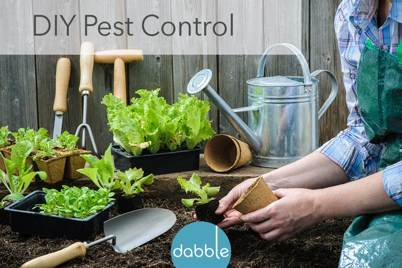 April Showers Bring… Garden Pests!