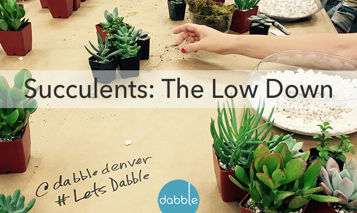 Succulents: The Low Down